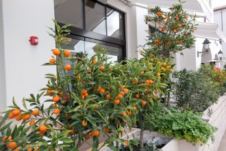 fruits and herbs grown at Crudo by Pascal Lorange