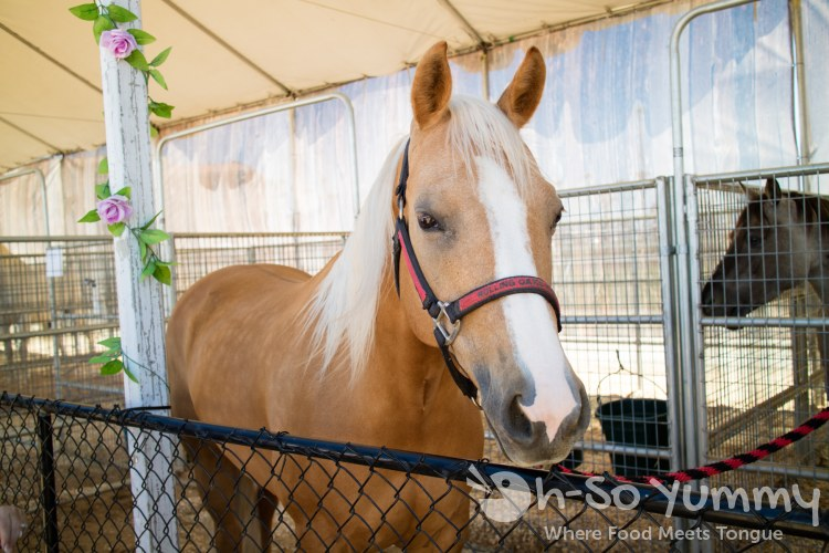 Sadie the palomino at San Diego Fair 2017 Where the West is Fun