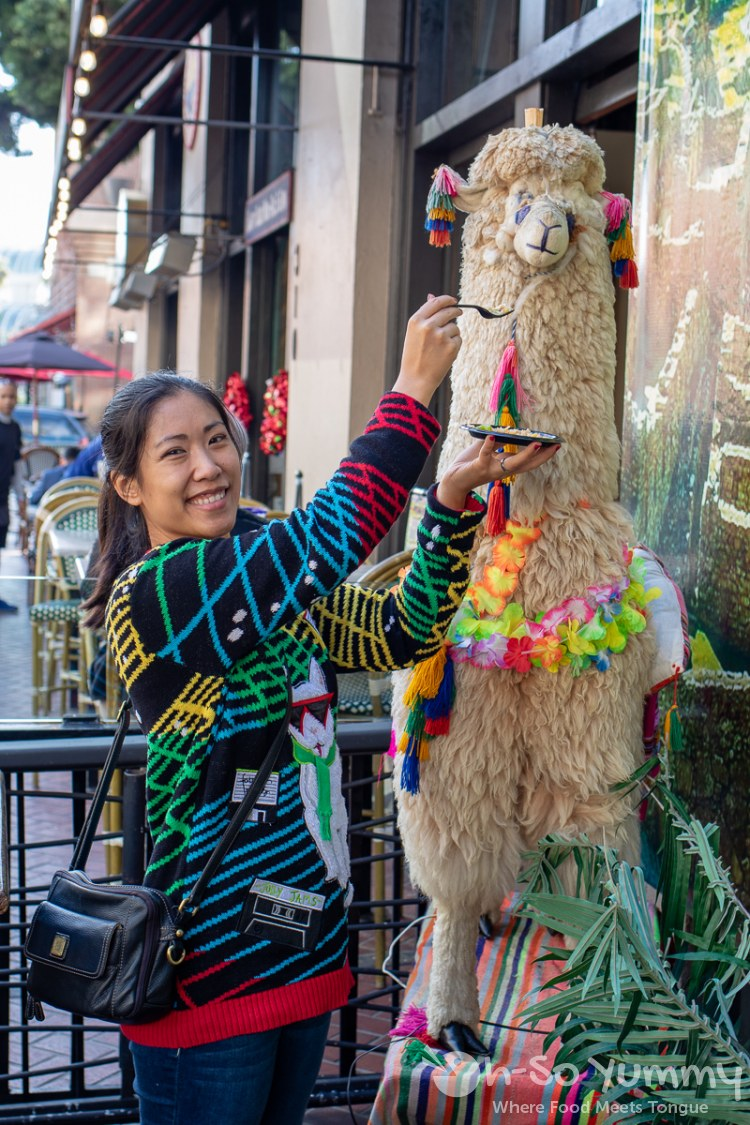 feeding the machu picchu llama at toast of gaslamp 2019