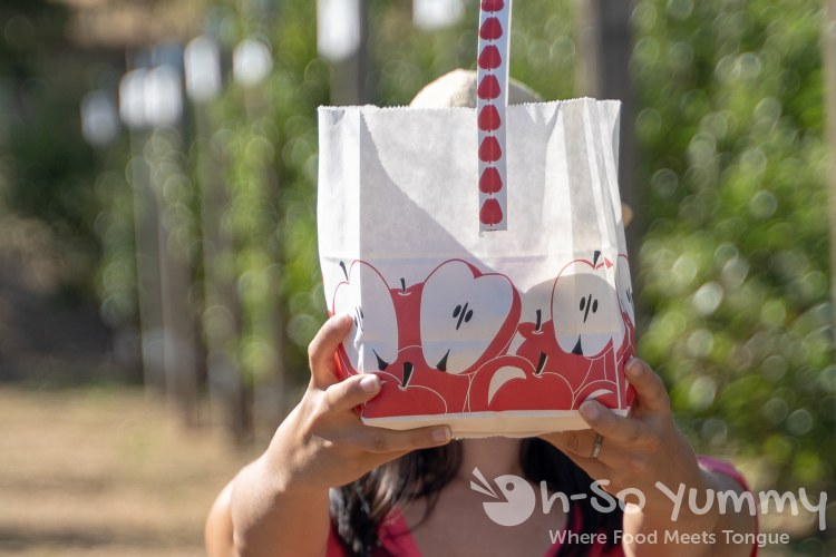 apple picking bag at Volcan Valley Apple Farm
